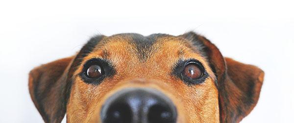 reha-mit-hund